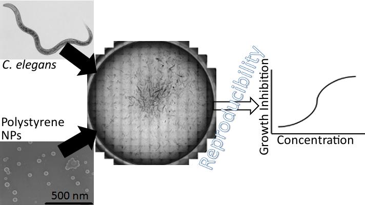 Nist Researchers Use A Standardized Caenorhabditis Elegans