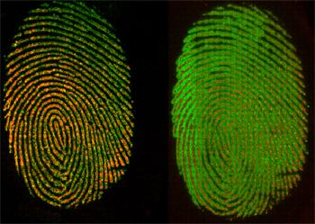 Dating fingerprints