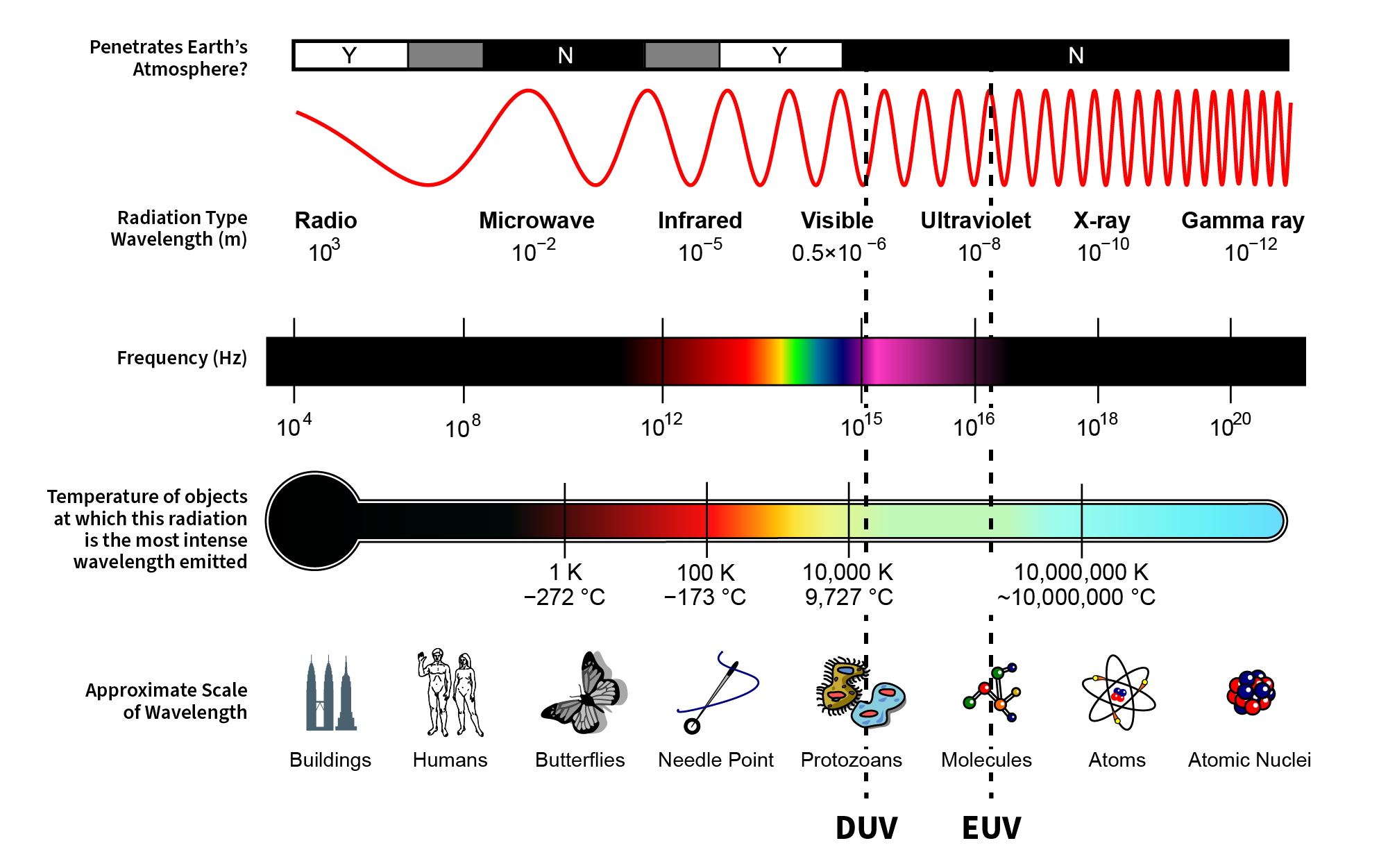 electromagnetic spectrum with the approximate location of the DUV and EUV wavelengths highlighted. DUV wavelengths are about the size of bacteria, whereas EUV wavelengths are closer to the size of molecules.