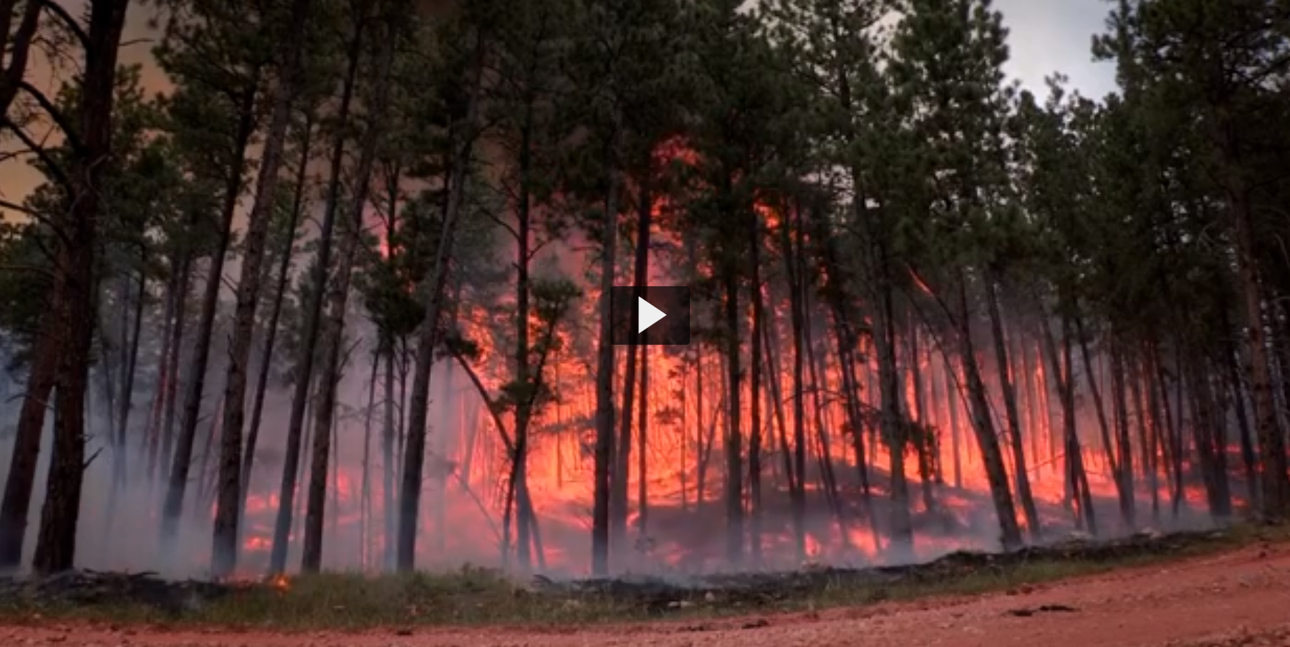 Screenshot of a video featuring trees and a wildfire
