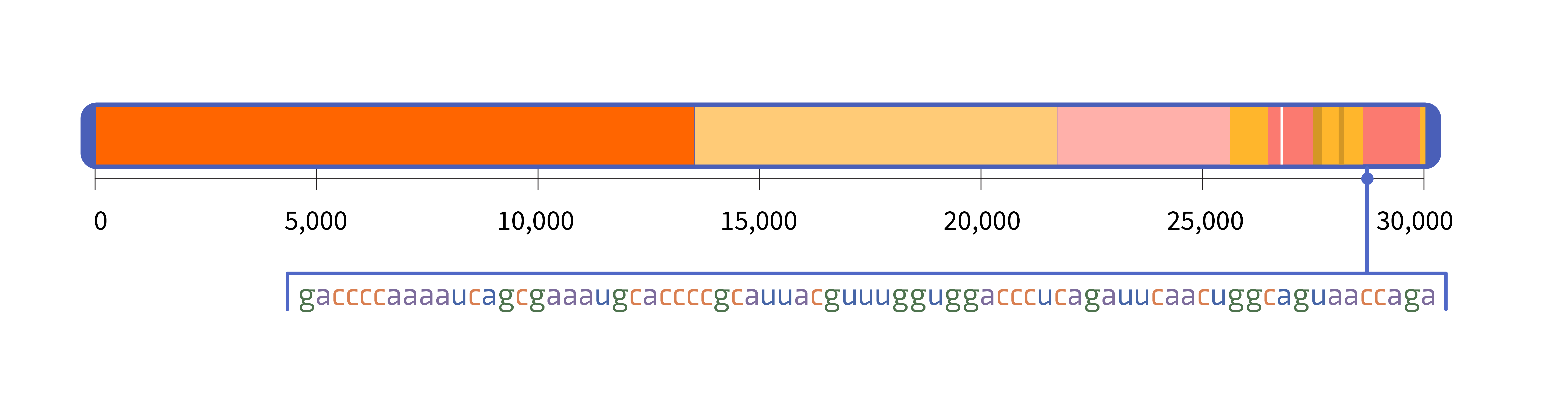 A horizontal rectangle representing the SARS-CoV-2 genome and a pointer indicating the location of a 72-letter sequence within the genome.