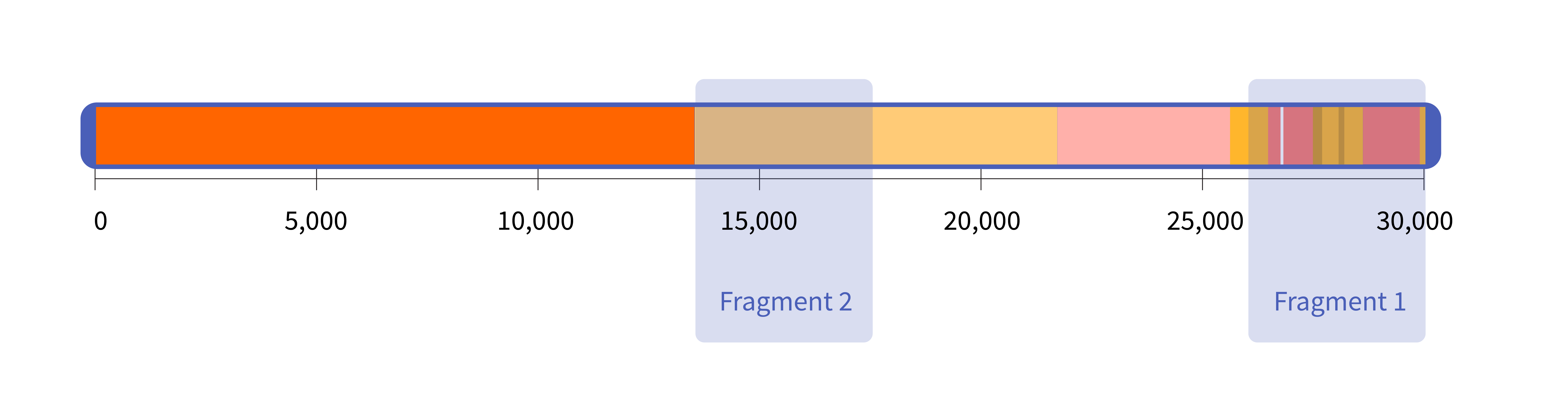 A horizontal rectangle representing the SARS-CoV-2 genome and two blue, transparent rectangles superimposed on it, representing the size and location of the synthetic RNA fragments from NIST.