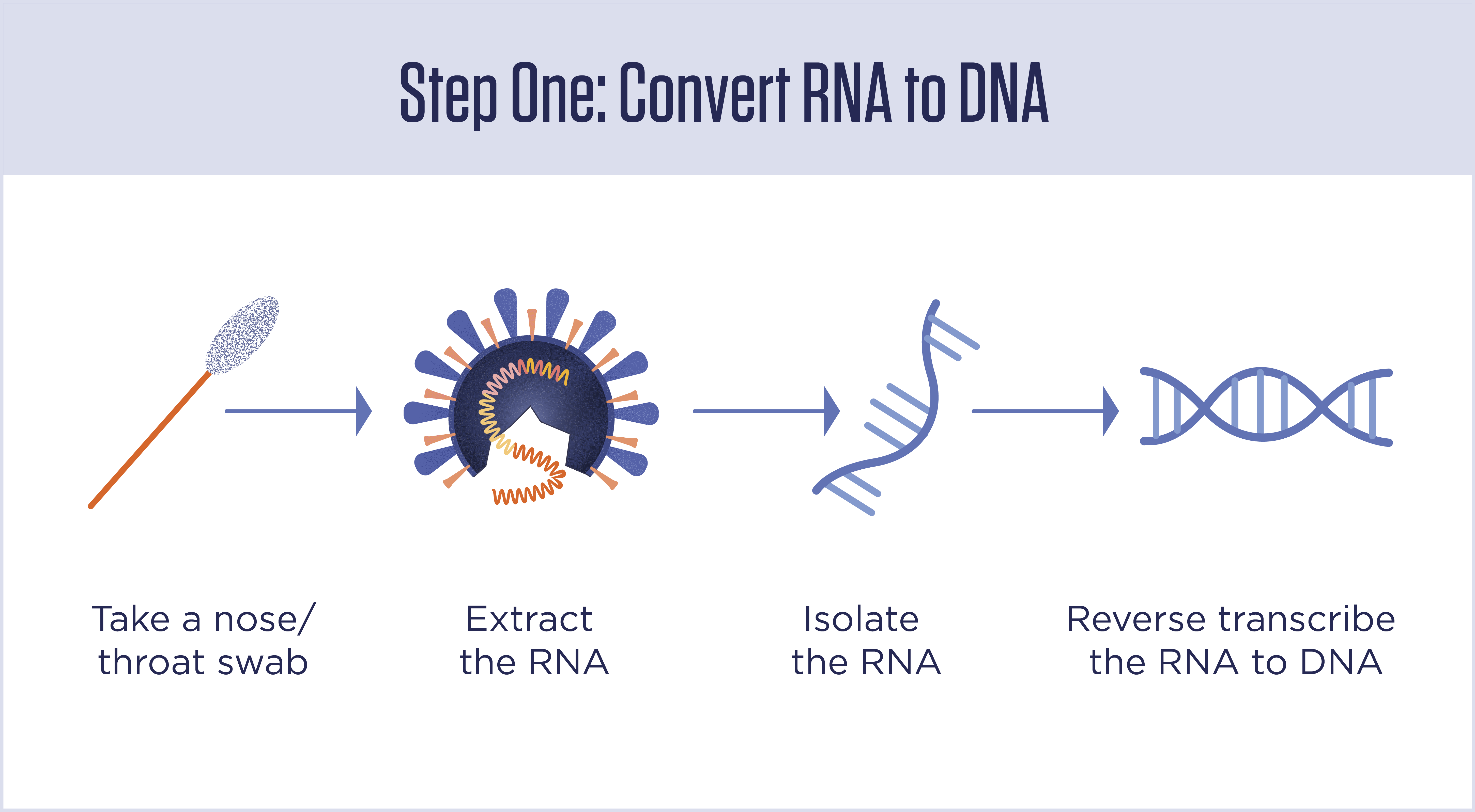 A procedural diagram with icons representing components of the testing process: taking a nasal swab, extracting the RNA, isolating the RNA, and reverse transcribing the RNA to DNA.