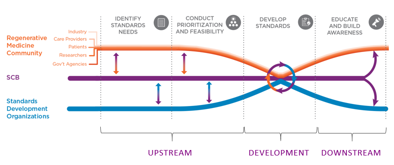 how SCB fits into the standards development process for the regenerative medicine community.