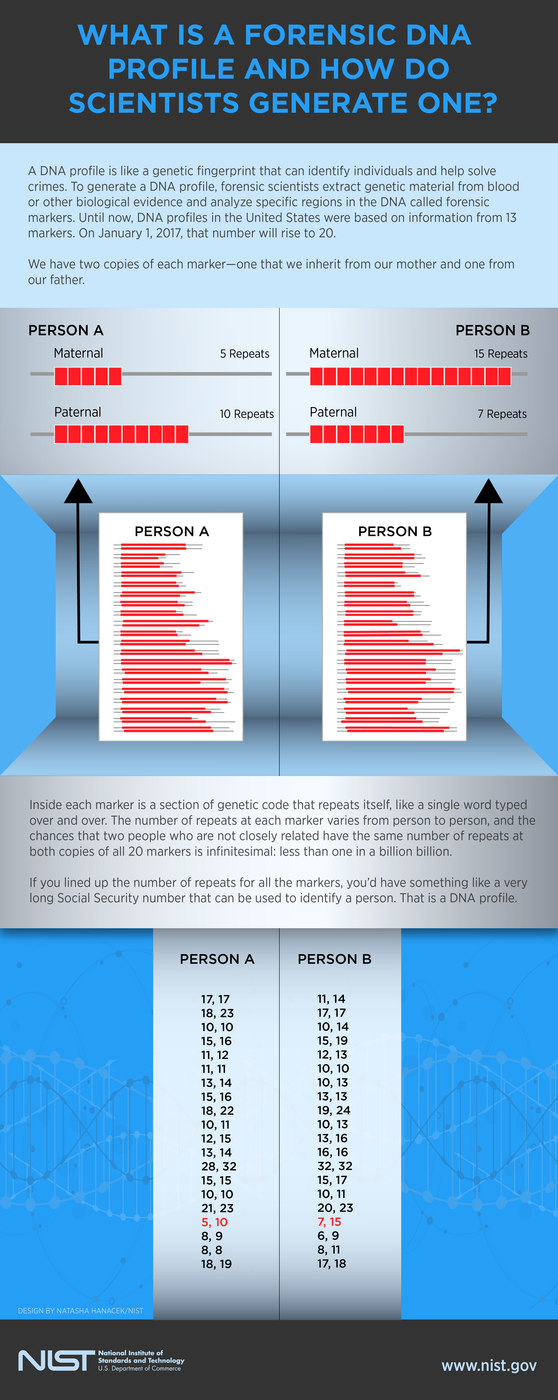 Infographic detailing forensic DNA profiling