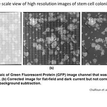 Large scale view of high resolution images of stem cell colonies