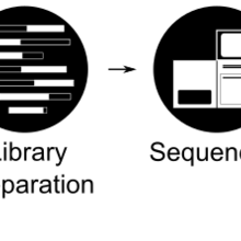 Metagenomics Workflow