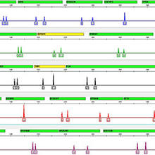 A DNA profile based on 24 genetic markers (stretches of DNA found at specific locations in the genome).