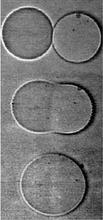 A series of three photos show two liposomes fusing into one.