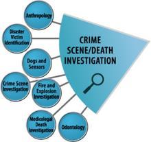 Crime Scene Death Investigation wedge