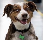 Rowdy Crownover, Chief Executive Dog, Texas Nameplate Company