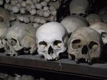Real Human Skulls