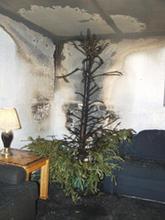 Tree Pic 7