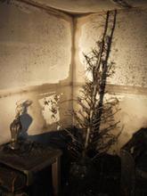 Tree Pic 9