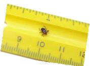 tick on ruler