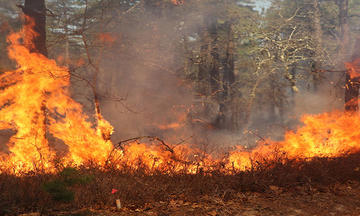 A fire burns along the ground at the edge of a wooded area.