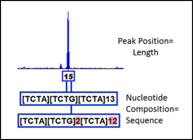 CE and sequencing results for STR D3S1358 an allele 15 example