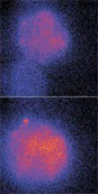 Fluorescent images of two liposomes fusing