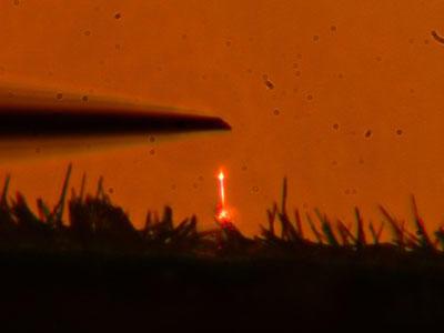 Optically pumped GaN nanowire laser shown glowing orange.
