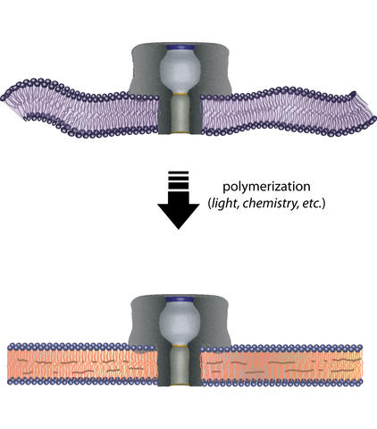 nanopores illustration