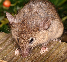 photo of mouse