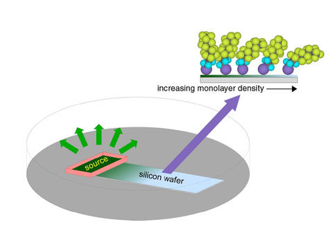Schematic of the monolayer self-assembly process studied by the NIST/NCSU team.