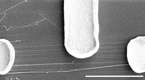 Scanning electron microscope image shows electrodes connected to group of nanowires.