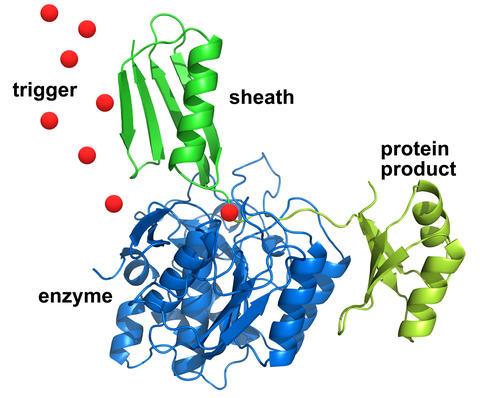 Illustration of protein purification