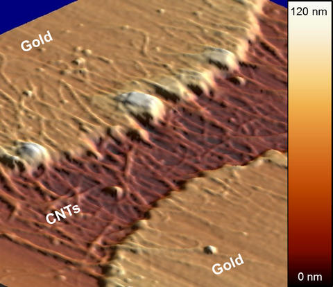Micrograph of recession and clumping in gold electrodes