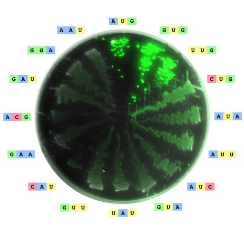 Image of an agar plate