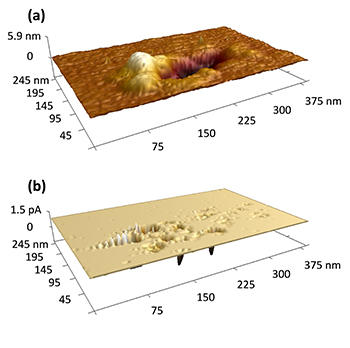 AFM topography image