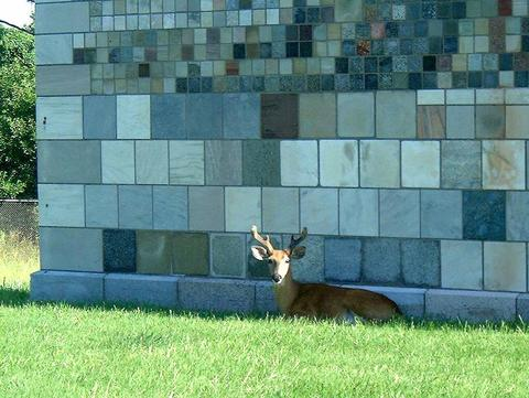 Wall with deer