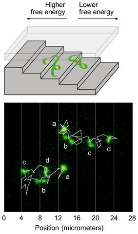 The top illustration shows a strand of DNA going down a nanometer-scale suitcase; the bottom illustration shows the trajectories of the DNA strands as they descend the staircase.