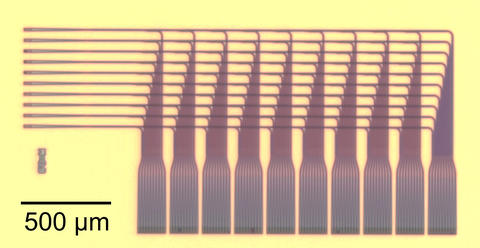 Ten amber-colored hair combs with handles lined up facing left on a yellow background