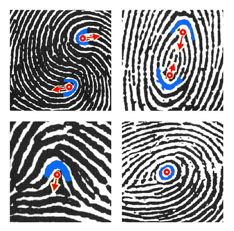 Latent fingerprint feature examples; Credit: ANSI-NIST-ITL