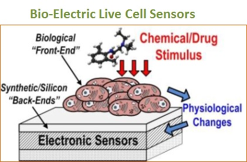 Paving the Way for Bio-Semiconductor Development