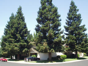 photo of house surrounded by trees