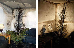 photos of two Christmas trees