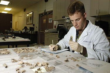 A U.S. Navy forensic odontologist studies dental remains