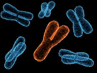 y chromosome