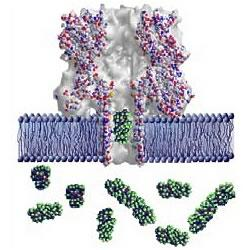 Graphic showing a lipid bilayer membrane (blue) with an alpha-hemolysin nanopore