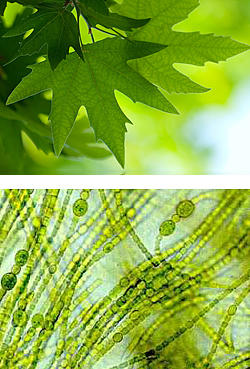 photo of leaf and organisms