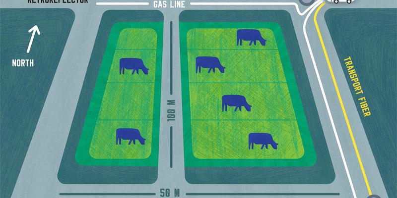 Illustration shows cows in field with laser and fiber paths around the edges.