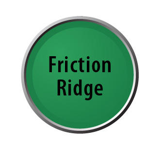 Friction Ridge lollipop