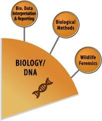Biology SAC Wedge