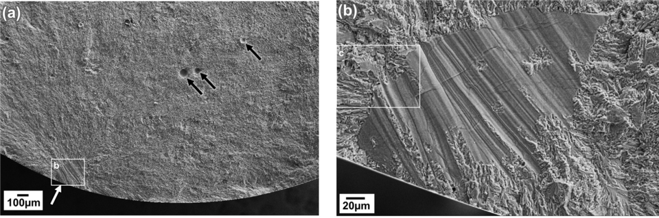 Scanning electron microscope (SEM) images of AM titanium alloy (Ti-6Al-4V) high-cycle fatigue fracture surfaces showing fatigue crack initiation at lack-of-fusion (LOF) defect (white arrow).  Also shown on the same fracture surface are entrapped gas pores