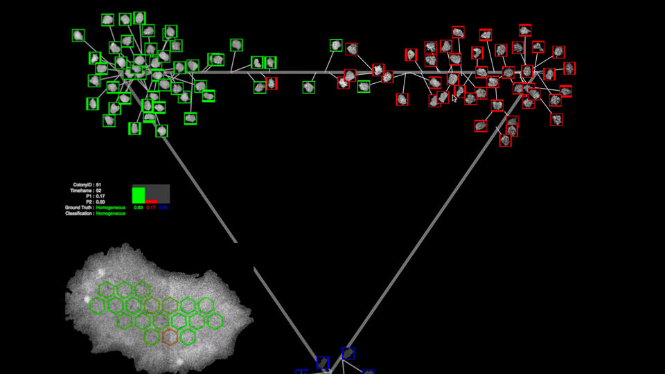 A still image from the WIPP software, which shows several cells outlined in red and several in green against a dark background.  Also pictured: a map of the cells geographic location within the petri dish.