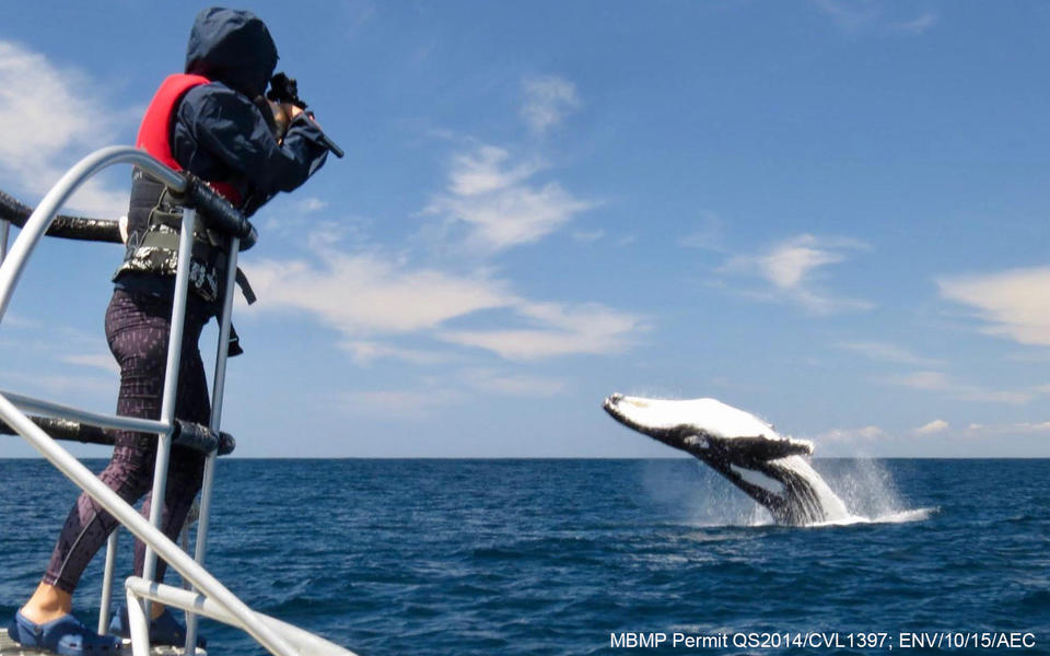 a researcher on a boat fires a dart at a breaching humpback whale