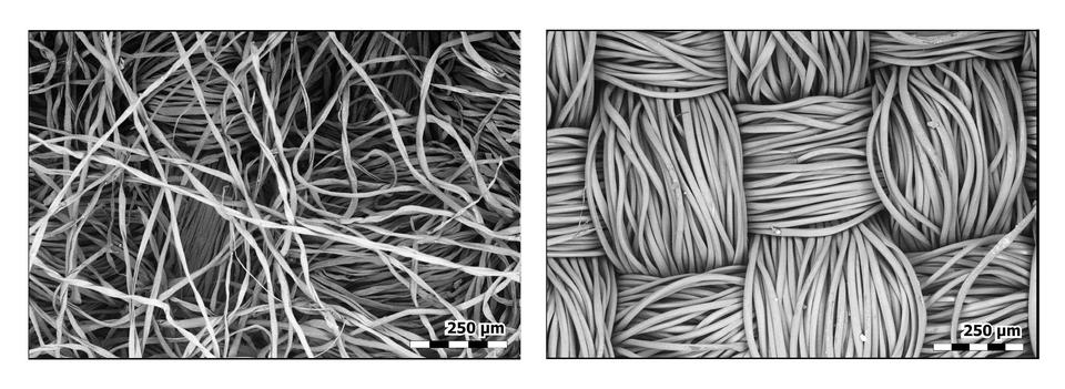 Side-by-side black and white images of fibers with scale bars at lower left indicating the degree of magnification.
