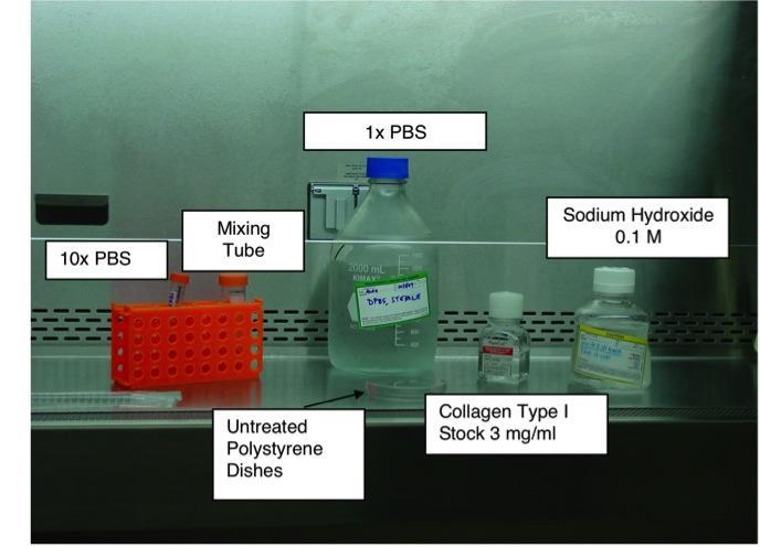 Collagen fibril workflow